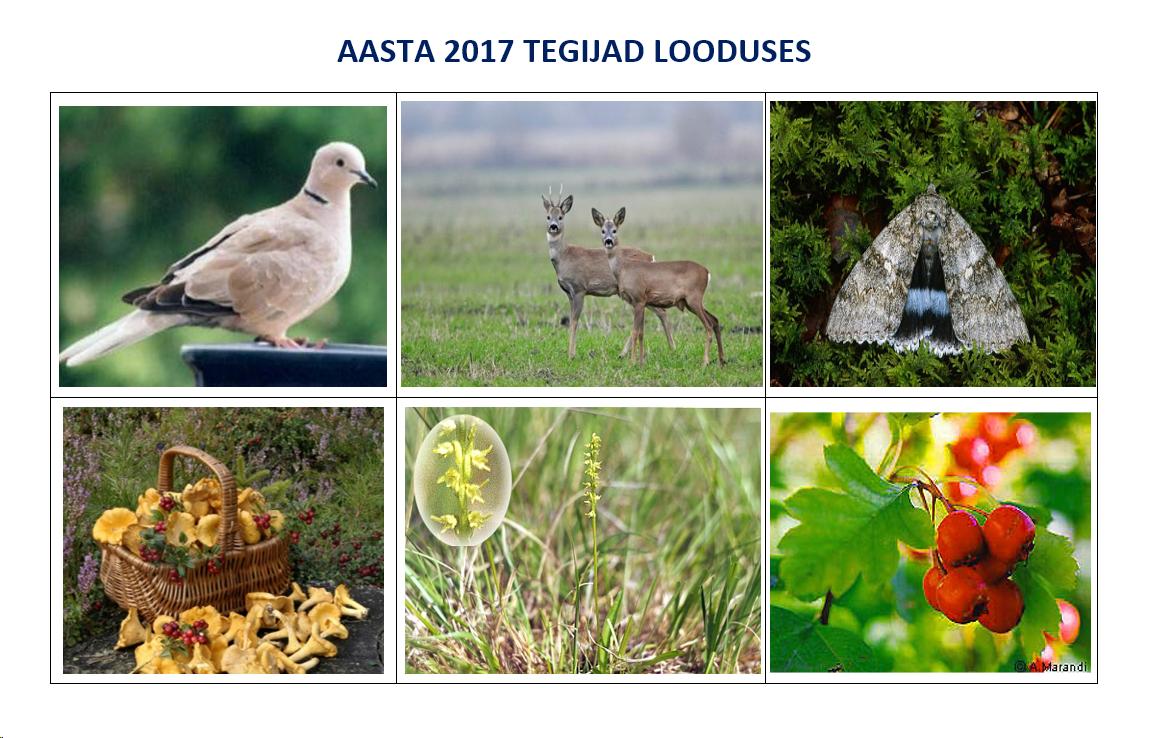 Aasta 2017 tegijad looduses