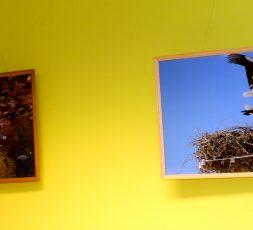 (Eesti) Harrastusfotograaf Ilmar Mesi loodusfotode näitus