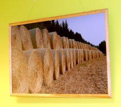 Harrastusfotograaf Ilmar Mesi loodusfotode näitus