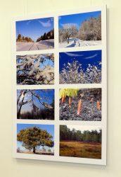 Pilt Tapa Põllu Kodu elanike loodusfotode näituselt